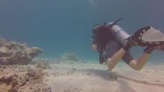 Hannah in action at Marsa Mubarak (Alan Fryer) Tags: divers redsea egypt diving underwaterphotography emperordivers goprohero3 marsamubarak