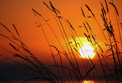 Dans le soleil couchant (luan h) Tags: sunset france nature soleil pentax bretagne soir plage coucherdesoleil plantes finistre herbes paysbigouden baiedaudierne plovan k5ii pentaxk5ii