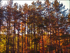 Fall arrives in Elysburg, Pa. (MissyPenny) Tags: autumn trees mountains rural pennsylvania explore poconos elysburg northumberlandcounty centralpennsylvania kodakz990 pdlaich missypenny
