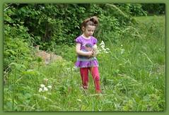 Tennessee wildflowers (Ducks & Daisies) Tags: daisies wildflowers ducksdaisies