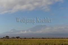 10075813 (wolfgangkaehler) Tags: 2016 africa african eastafrica eastafrican kenya kenyan amboseli amboselikenya amboselinatlparkkenya amboselinationalpark landscape scenery scenic mountkilimanjaro volcano extinct extinctvolcano highest