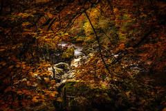 autumn colours (Morag.) Tags: autumn colour fall tree leaf red orange yellow gold green water exposure river rock october scotland nikon d3300 nikkor dunkeld inver thehermitage woodland forest brown natur natural braan landscape landschaft