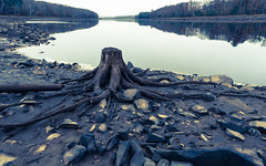 Disposession (Wicked Dark Photography) Tags: landscape wisconsin deadtree deadtrees fall nature river stump water