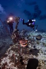 FLA-161001-ND800-8177 (ferlopez) Tags: batfish fish longfinbatfish marinelife plataxteira spadefish underwaterphotography wailea mauihawaii usa