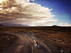Walking at sunset (Carmen Cabrera .) Tags: outdoor sky clouds nubes cloudy nublado iphoneography mobilephotography iphone6s iphone iphoneographer mobilephotographer editedoniphone editedonipad sunset atardecer pet mascota perro dog correa dogleash path caminodetierra ground horizonte montaas mountains campo country benito savacho blue azul brown marron tranquilidad quite tranquility soledad solitario solitude lonely paisajedesierto dessertlandscape paisajeseco drylandscape naturaleza nature daylight luznatural