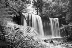 Russell Falls (Wanderer and Wonderer) Tags: tasmania australia mountfieldnationalpark nationalpark russellfalls water waterfall nature landscape ferns blackandwhite