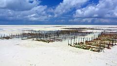 Seaweed Farmin (sagimihaly) Tags: africa tanzania zanzibar summer vacation pajebeach paje indianocean ocean sand whitesand endlessblue beach blue