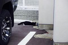 Today's Cat@2016-10-21 (masatsu) Tags: cat thebiggestgroupwithonlycats catspotting pentax mx1