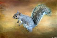 (Ken Mickel) Tags: animal animals berwyn illinois outdoors parks proksapark squirrel texture textured textures wildlife citypark cityparks nature park photography
