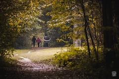 2016-10-23_Q8B1589  Sylvain Collet.jpg (sylvain.collet) Tags: autumn boisdeclichy forest umbrella pluie foret automne rain parapluie nature