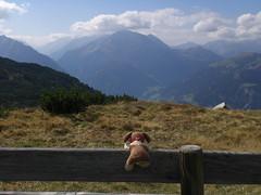 Watching the Grnberg (bookhouse boy) Tags: gerlosstein 2016 berge mountains alpen alps zillertaleralpen zillertal ramsau ramsberg altekotahornalm sonnalm heimjchl gerlossteinwand 30september2016 stardoug