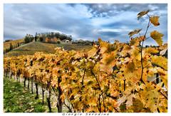 vigneti del collio (Giorgio Serodine) Tags: collio friuli italia erba colline viti tralci fili pali foglie cielo nuvole alberi allaperto grandangolo canon
