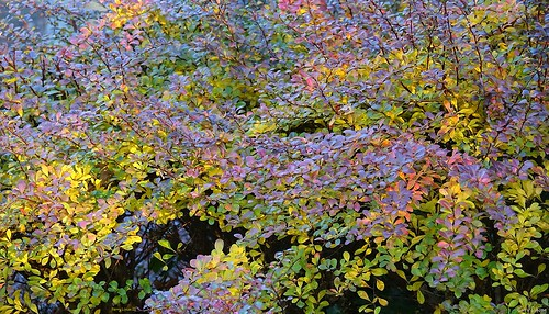 """Autumn Color • <a style=""""font-size:0.8em;"""" href=""""http://www.flickr.com/photos/52364684@N03/30961981221/"""" target=""""_blank"""">View on Flickr</a>"""