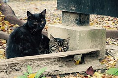 Today's Cat@2016-11-16 (masatsu) Tags: cat thebiggestgroupwithonlycats catspotting pentax mx1