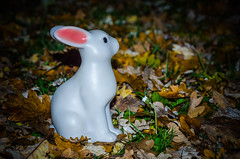 Chasse au lapin (sam.lati) Tags: nikon d7000 nikkor 50 18 rabbit lapin nuit flash flower leaves toy hunting d