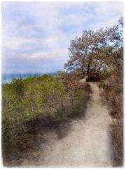 Torrey Pines, Del Mar California (Solly Avenue) Tags: landscape travel coastal ipadpainting painterly painterlyapp ipadsketching impressionism photomanipulation