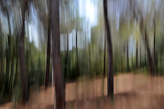 bosco mediterraneo. (LucaBertolotti) Tags: trees tree alberi albero bosco foresta blurry blurred motionblur mosso barabarca spiaggiadibarabarca elba isoladelba toscana italia italy world landscape