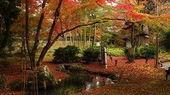 Little Stream (maco-nonchR(on/off)) Tags: kioto kyoto hogonin arashiyama   sagano    autumn little stream garden garten maple trees bamboo manualexposure