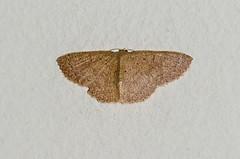 Moth (mcvmjr1971) Tags: 2016 d7000 nikon brasil f28 mmoraes niteri riodejaneiro niteroi curtoniteroi pendotiba diego sigma150mmmacro niteri