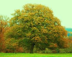 Nightfall tree (ekaterina alexander) Tags: nightfall tree trees autumn leaves landscape ekaterina england alexander sussex nature photography pictures nymans national trust wood woodland