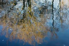 Inge Hoogendoorn (ingehoogendoorn) Tags: trees water bomen tree boom reflection reflectie upsidedown autumn herfst blue blauw abstract