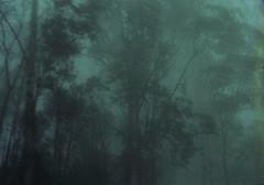fog 2 (pedropapini) Tags: trees film me 35mm blurry day with pentax taken super pedro 135 martinho papini