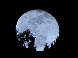Pink Moon +1 over the Carolina Pines - April 7, 2012