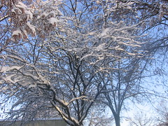 la neige 037 (maleki_guita) Tags: am laneige