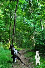 Ink of the Jungle (Bear8Photo) Tags: statepark park travel trees dog dogs animal animals forest ink nationalpark pennsylvania parks vine william pitbull pa trail bordercollie dogphotography petportrait blackandwhitedog stateparks happydog petphotography travelphotography panationalpark blackwhitedog pennsylvanianationalpark williamhkaincountypark jacobuspa pennsylvaniawilderness bear8photo jacobuspennsylvania paforest paforests pawilderness