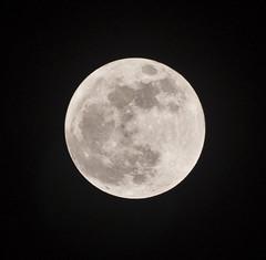 Super Moon Saturday 05/05/2012 (CAUT) Tags: camera moon southamerica night noche nikon colombia nocturnal may luna fullmoon nocturna dslr lunallena 2012 050512 rflex d90 amricadelsur bigmoon nikond90 supermoon superluna natgeoluna 05052012