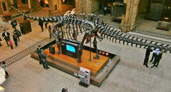 Natural History Museum London UK (hytam2) Tags: uk england london museum naturalhistorymuseum 2012