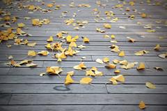 Fallen leaves (Sara Ontoria) Tags: road wood autumn naturaleza hoja nature leaves yellow canon botanical hojas is leaf madera camino andalucia fallen cordoba otoo usm andalusia garde amarilla jardn vegetacin botnico amarillas f3556 cadas 550d cmwd cmwdyellow 1585mm cmwdweeklywinner
