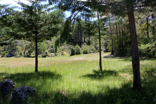 forest meadow in the Ports
