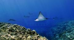 2012 10 METTRA OCEAN INDIEN 0107