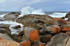 St. Helens - St Helens Point Conservation Area (scrumpy 10) Tags: nature landscape nikon natur australia tasmania australien mothernature landschaften d800 tasi tasmanien tasmanianwilderness jacqualine scrumpy10 sthelensconservationarea
