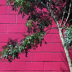 hot pink meets dusty tree (msdonnalee) Tags: pink tree wall explore cinderblockwall