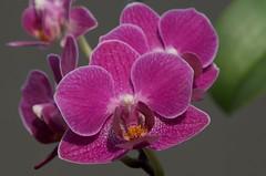 Flower Misc  3
