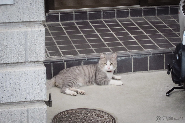 Today's Cat@2013-09-12