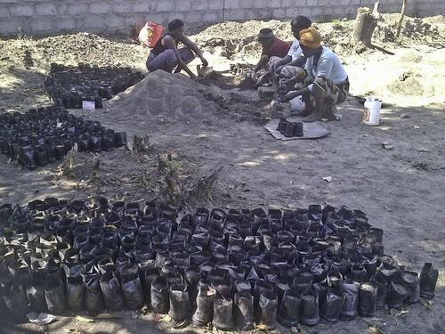 Zambia - Community Group Filling Poly Pots for Savannah Project (iii), Mufulira Town -  July, 2013