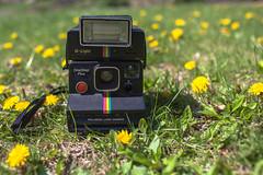 #FlickrFriday (espressoDOM) Tags: flickrfriday weed cultivatedlandscape polaroid qlight onestepplus polaroidland camera pollen spring