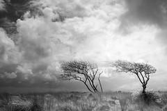 Exmoor Skies (Russ Barnes Photography) Tags: trees blackandwhite mono nikon monochromatic infrared d800 exmoor tiltshift 720nm russbarnes nikkor45mmpce