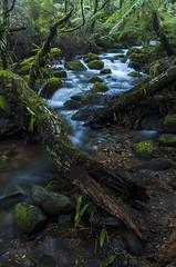 Cement Creek (Sezzypants) Tags: longexposure creek forest river stream australia victoria ferns polarizer warburton mtdonnabuang cementcreek yarrarangesnationalpark afs1224mmf4 nikond7000 nikkorafs1224mmf4