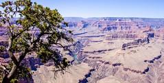 Grand Canyon (anthony.arluison) Tags: arizona usa grandcanyon paysage paysages pointdevue