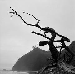 Oregon (austin granger) Tags: oregon oregoncoast driftwood death correspondence mind form tree surf beach lincolncity fog square film gf670