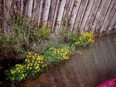 TAPCO to Tuzigoot, Verde River, 10-16-16 (EllenJo) Tags: pentaxqs1 pentax october16 2016 ellenjo ellenjoroberts clarkdalearizona tapcototuzirap kayaking verderiver arizona az autumninarizona october ellenjorobertskayakingtheverderiver clarkdaleaz lowertapco tuzirap 86324 verdevalley