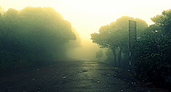 Dawn.. About to rain.. (Perceptive Photography) Tags: nature light tree trees outdoor road travel perceptivephotography dawn morning forest jungle