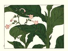 Tobacco (Japanese Flower and Bird Art) Tags: flower tobacco nicotiana tabacum solanaceae hoitsu sakai kiitsu suzuki kimei nakano nihonga woodblock picture book japan japanese art readercollection