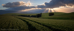 Overberg Rays Panorama (Panorama Paul) Tags: paulbruinsphotography wwwpaulbruinscoza southafrica westerncape overberg greyton wheatfield farm clouds rays sunset nikond800 nikkorlenses nikfilters panorama