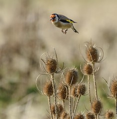 We have lift off (Roger W Ford) Tags: bird avian