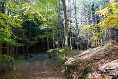 DSC_0204 (Pter_Szab) Tags: mtra matra hungary nature autumn colours mountains galyateto galyatet forest hiking nationalpark landscape